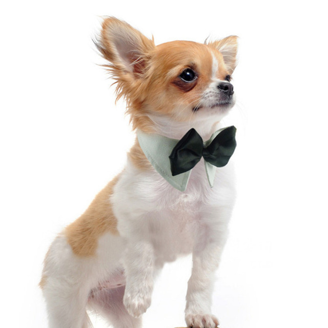 Dog Bow Tie Collar ie Bow Cat Pet Fashion Canines Black White ...