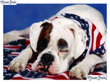 MOONCRESIN Diy 3D Diamond Painting Dogs With A Scarf Mosaic Full Embroidery Cross Stitch Decoration Square Kits