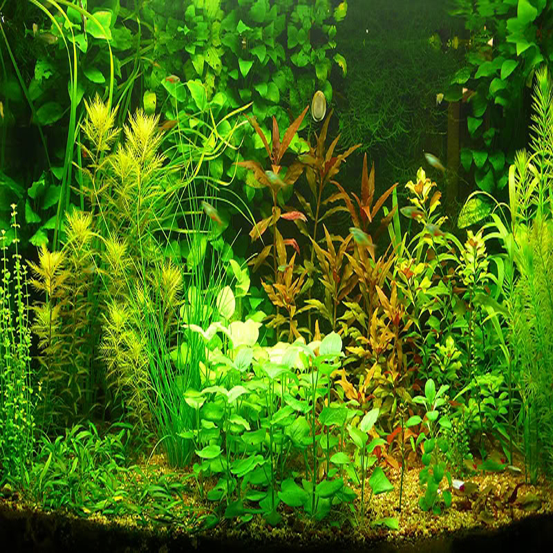 20 kinds Aquarium Grass Seeds Water Aquatic Plant Seeds Easy to grow 20pcs for each kind total ...