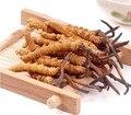 Venda quente 1 KG Cordyceps sinensis extrato em pó GMP fonte Da Fábrica 100% Natural/lagarta fungo Frete grátis