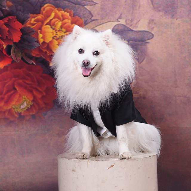 Male Dog Clothes Boy Dog Suit Tuxedo Coat Jacket Puppy Pet Wedding Dress Small Dog Chihuahua Costume Black Pet Party Apparel 1