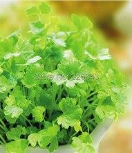 Четыре Сезона петрушки, семян кориандра, растительные семена для посадки сезон-160 Семян частиц