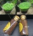 Aquarium Plant Seed Glossostigma elatinoides Hemianthus callitrichoides Aquatic Fish Tank Decoration Landsacape