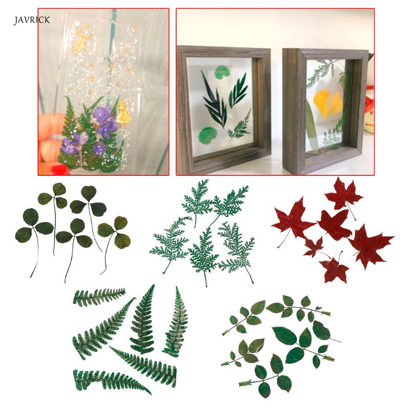 5 Pcs/Set Dry Leaf Filler DIY Epoxy Resin Crafts Dried Leaves Materials Bookmark Label Plants Grass Ornaments Handmade Gifts