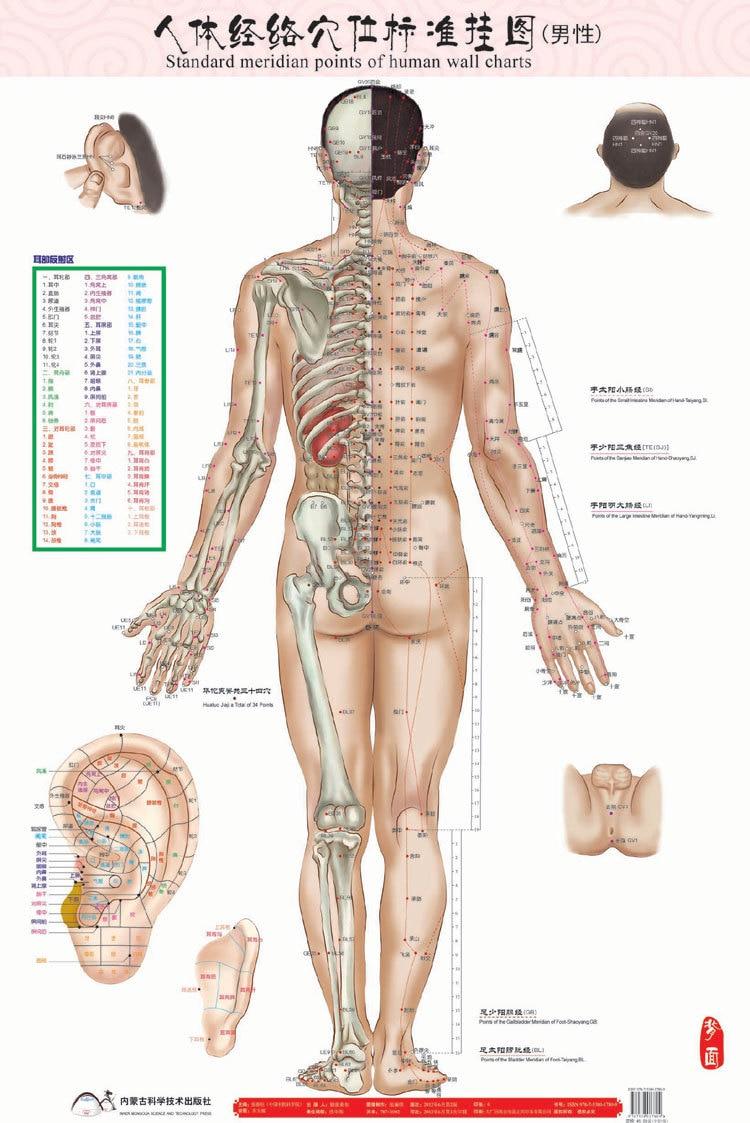 Fantastisch Karte Der Menschlichen Organen Bilder - Anatomie Ideen ...