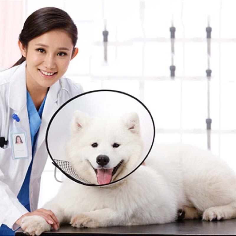 Nuevos Accesorios Del Perro Productos Para Mascotas Collar de Perro Gato De Plás