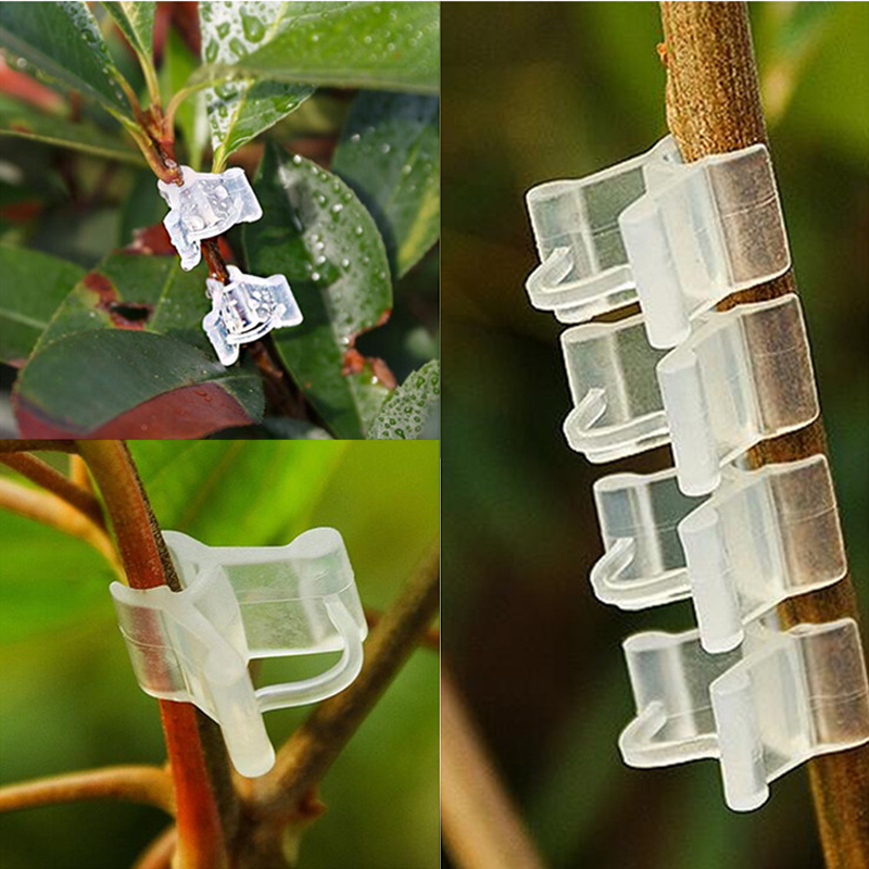 50/100pcs Plastic Plant Support Clips For Tomato Eggplant Plants Grafting Clip Fixed Greenhouse Vegetables Garden Ornament50/100pcs Plastic Plant Support Clips For Tomato Eggplant Plants Grafting Clip Fixed Greenhouse Vegetables Garden Ornament
