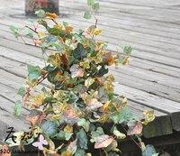 100 CM Plastic groene opknoping bloemen Levensechte Rode Druif Kunstbloem Opknoping Plant Silk Garland Wijnstok MA1712
