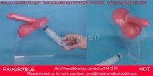MALE CONTRACEPTION SIMULATOR SIMULATOR,MALE CONTRACEPTIVE PRACTICE MODEL,MALE CONTRACEPTIVE DEMONSTRATION MODEL -GASEN-RZRTHL003