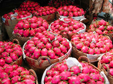 100% Real Dragon fruit seeds white and red Pitaya seeds for home garden Non-GMO fruit seeds bonsai or potted plants 100 pcs/bag