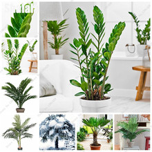 10 Pcs Bonsai Palm Seeds Perennial Flower Seeds Indoor & Outdoor Plants High Quality Potted Plants DIY Home Garden Household