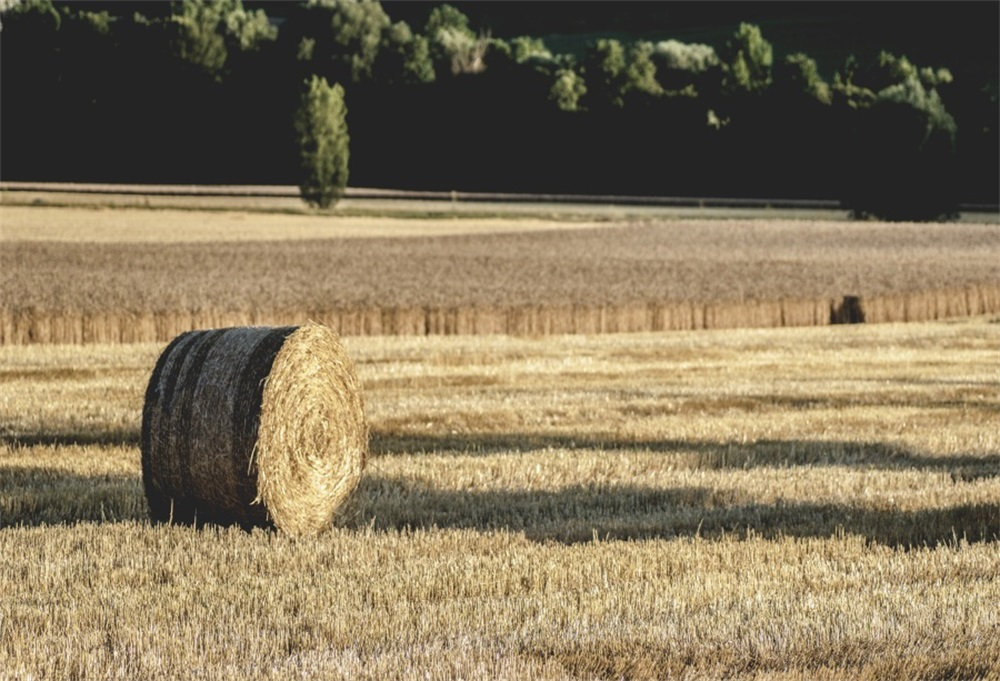 Laeacco Farm Field Hay Bale Photography Backgrounds Customized Photographic Backdrops For Photo Studio