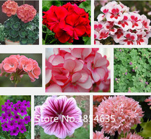Garden Plant 400 pcs / bag,Geranium seeds, potted balcony, planting is simple, budding rate of 95%, radiation absorption, flower