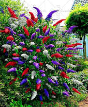 100PCS Japanese Lilac Bonsai Plant Butterfly Bush Potted Plant Perennial Lilac Tree Family Garden Decorative Plant