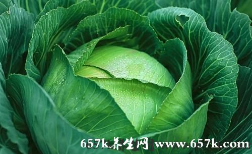 卷心菜的功效 卷心菜叶酸萝卜硫素含量高
