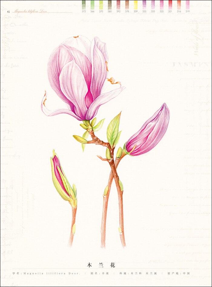 Lápiz chino dibujo flor pintura acuarela lápiz de color texto con ...