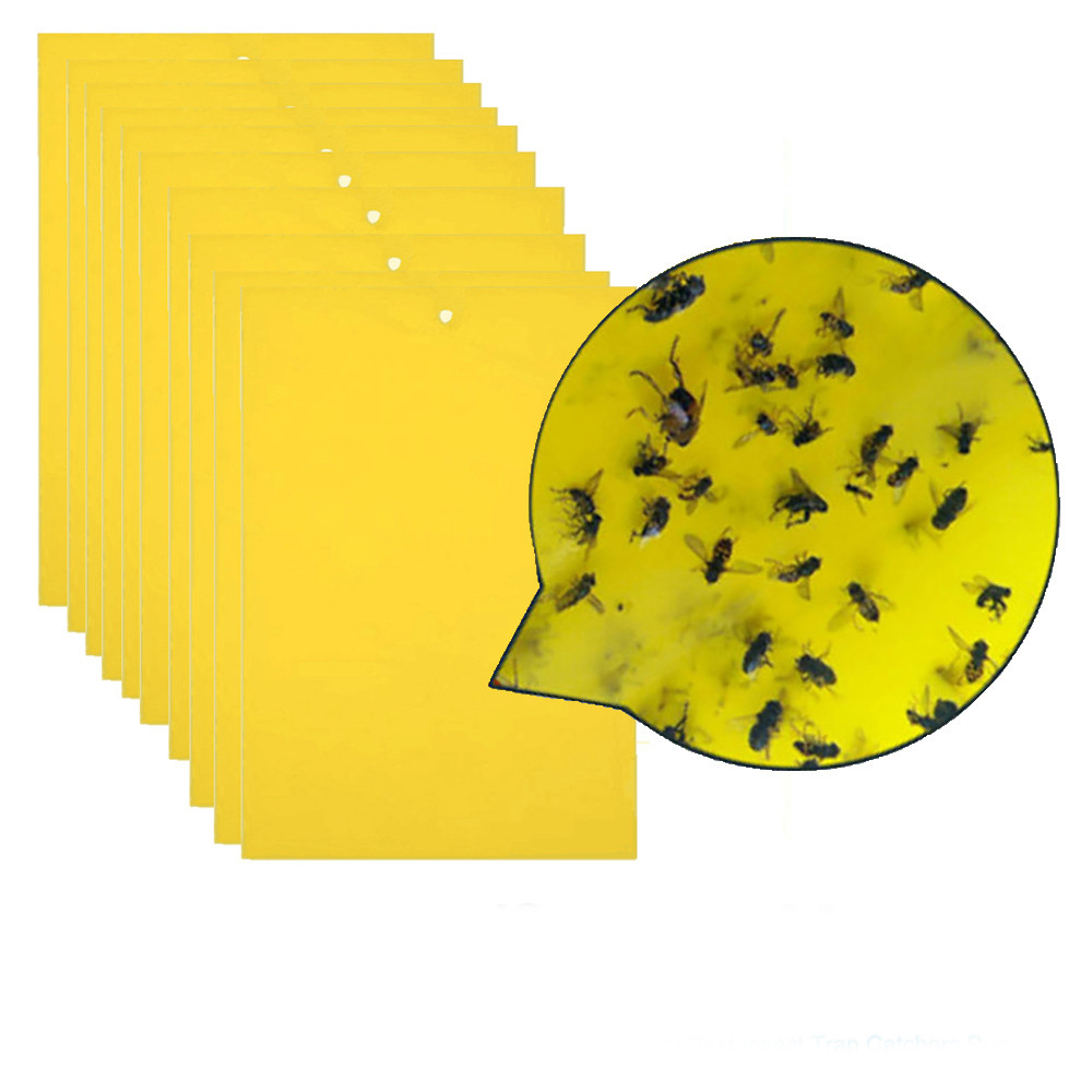 Image 3 - 20Pcs Strong Flies Traps Bugs Sticky Board Catching Aphid Insects Pest Killer convenient and  practical Household HOT Sale-in Baits & Lures from Home & Garden