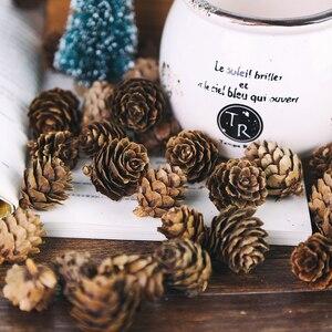 Image 3 - 5 adet/grup Doğal Mini Çam Fıstığı Sedir Meyve Ev Düğün Noel Ağacı Dekorasyon Fotoğraf Aksesuarları Fotoğrafları Sahne