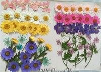 Các loại Ren Hoa Cúc Larkspur Khô Cắm Hoa DIY Điện Thoại Trường Hợp miễn phí giao hàng 3 túi