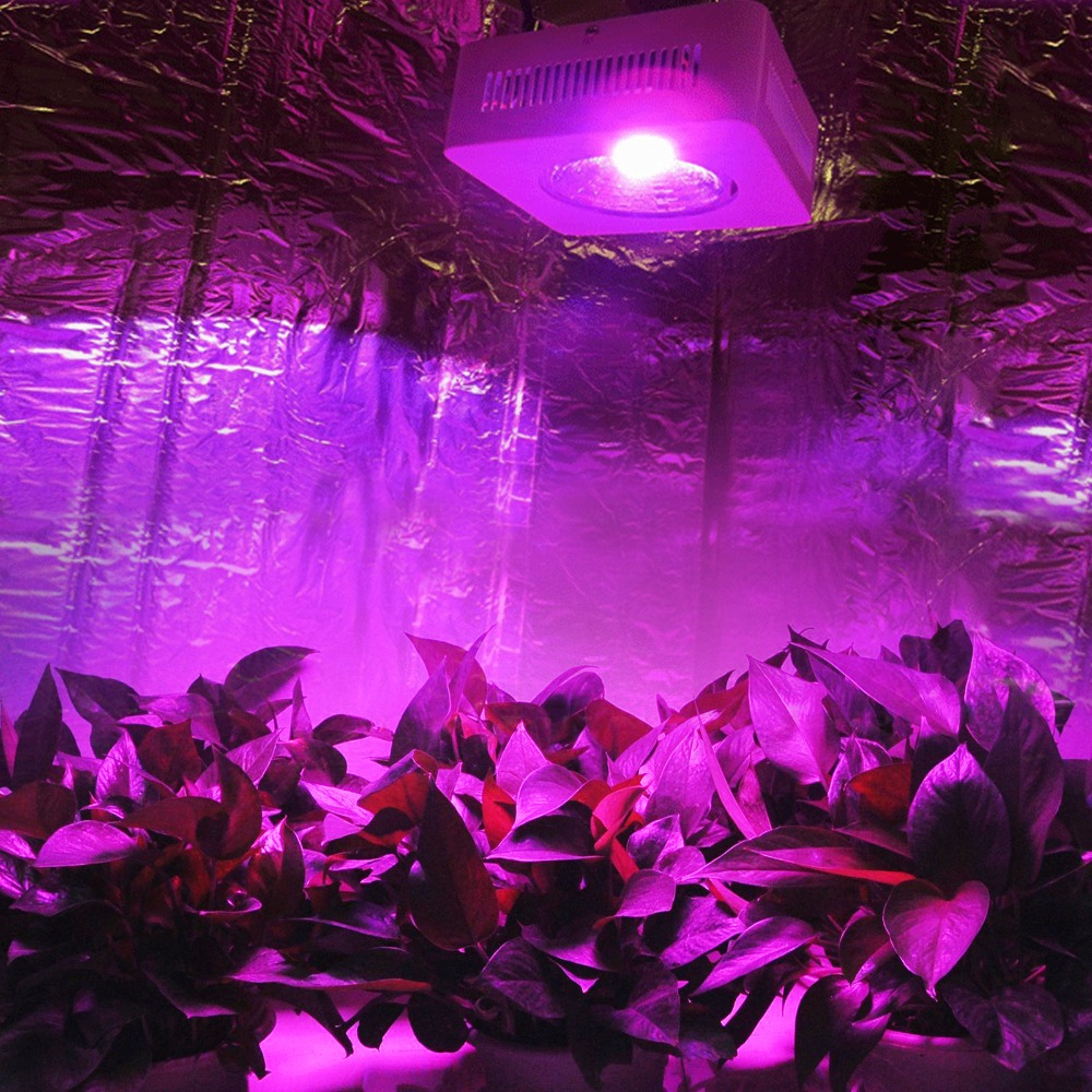 DE/CA/US Stock  200w COB Led Grow Light  64x3w Full Spectrum Grow Leds hydroponic lightings Best for Medicinal Plants
