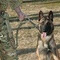 Ejército de EE.UU. Tactical correa de Perro Impermeable de Liberación Rápida de Servicio Pesado Pánico Complemento Ajustable correa de Perro Perro Militar Táctica Lleva la correa