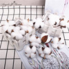 Cotton head artificial flower natural dried flower cotton home Christmas supplies decor DIY garland wreath flower wall material