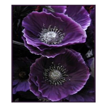Dark purple blooming poppy petal flower seeds potted bonsai DIY home garden plants poppy seeds courtyard 200PCS