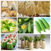 20+ Loofa-Luffa-Loofah Sponge Gourd  Seeds~Organic, most easy growing ,productive