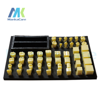 Manka Care - Crow Carving Procedure Model Oral Model Teeth Tooth Model