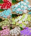 20g/lot  4.7cm Artificial Hydrangea Flower Petals Handmade Wedding Decoration Event Party Supplies Confetti Wreaths 027017037