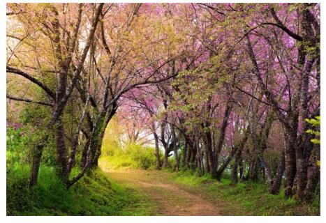 Spring blossom flowers 300 tall by 600 width backdrop