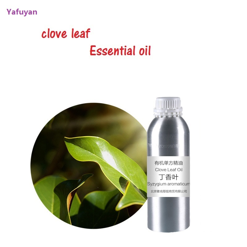 Cosmetics 50g/ml/bottle clove leaf essential oil base oil, organic cold pressed vegetable oil plant oil free shipping 500g natural organic moringa leaf pow der green pow der 80 mesh free shipping