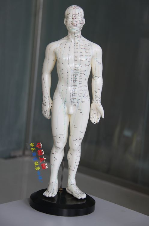 Male Human Acupuncture Points Model Acupuncture Point Model  body model for acupuncture point PVC model free shipping english medical female human body acupuncture point model 48cm