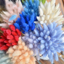 30Pcs Rabbit Tail Grass Natural Dried Flowers For Home Decoration Flower Arrangement Lagurus Ovatus Real Flower Grass Props(China)