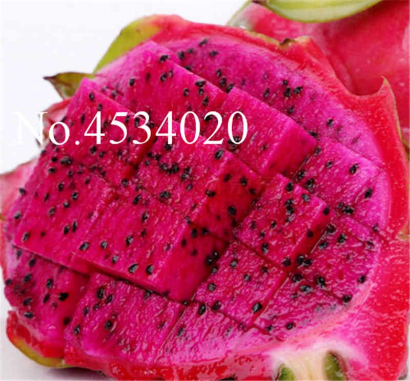 200 шт японские Сладости питая семена бонсай растения бонсаи фрукты анти-старения не ГМО белый дракон фрукты, технология бонзаи для домашнего сада