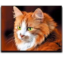 Diamond Embroidery Animal Cat Painting Cross Stitch Full Square Resin Particle Mosaics 5D Diy Drawing