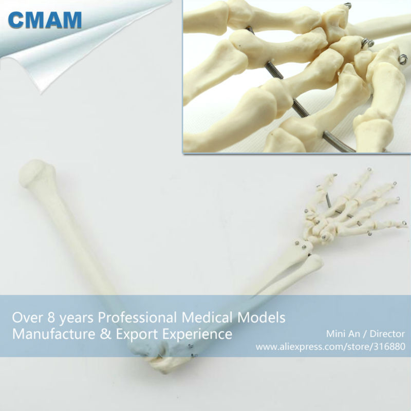 CMAM-JOINT11 Human Upper Arm Skeleton Models, Articulated Arm Skeleton Model plastic standing human skeleton life size for horror hunted house halloween decoration