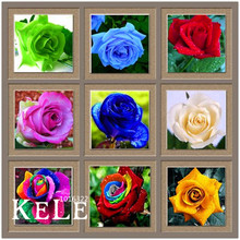 Loss Promotion!Flower pots planters ,20 Kinds Of 50 Seeds, Rainbow rose seeds Beautiful rose seed Bonsai plants Seeds,#S69N7C(China)