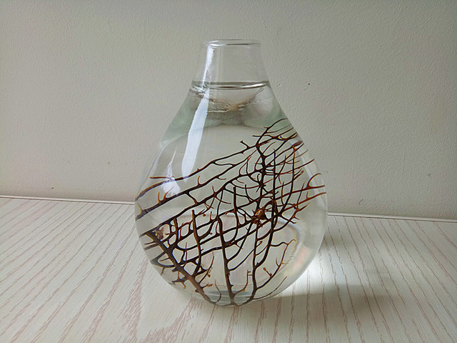 Teardrop Bulb Glass Terrariumtabletop Water Planting Vasedrop Orb