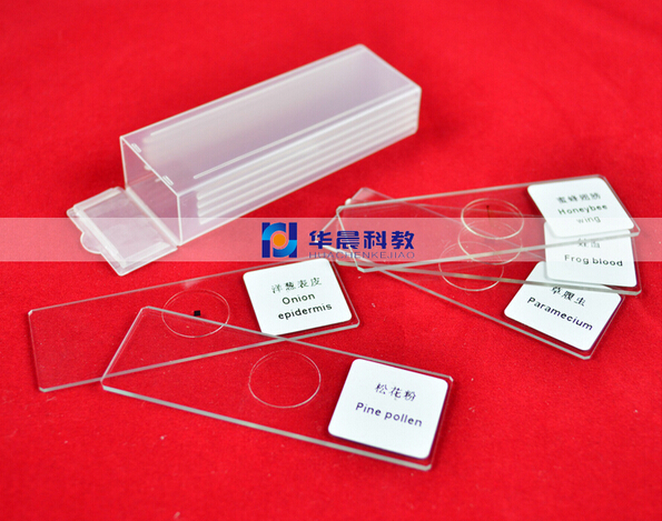 5pcs Educational Lab School Animals Insects Plants Glass Prepared Specimen Slides for font b Science b