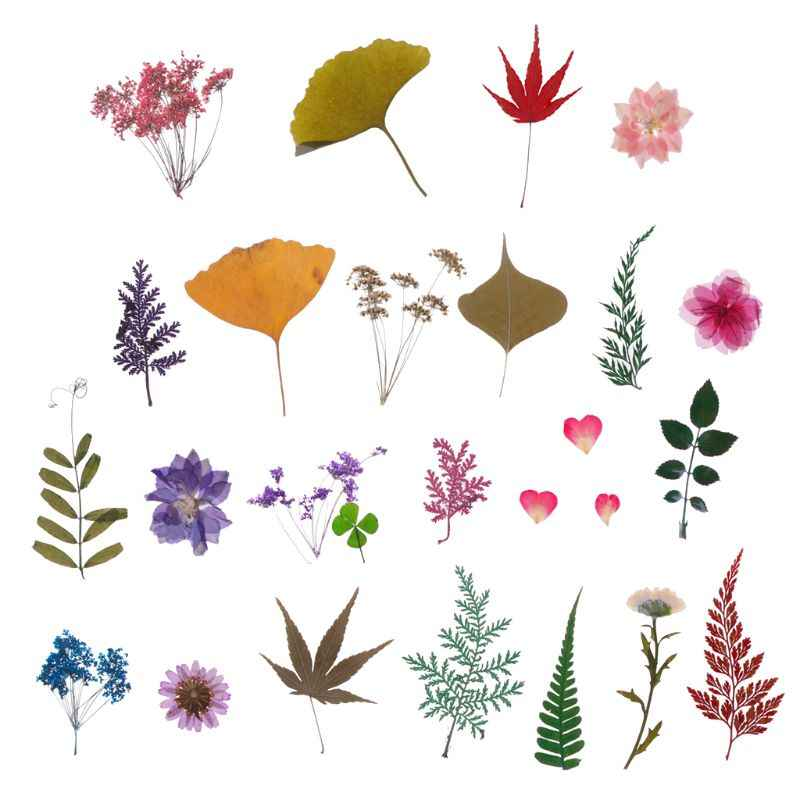Mix Pressed Flower Leaves Plant Specimen Fillers for Epoxy Resin Jewelry Making JUL3