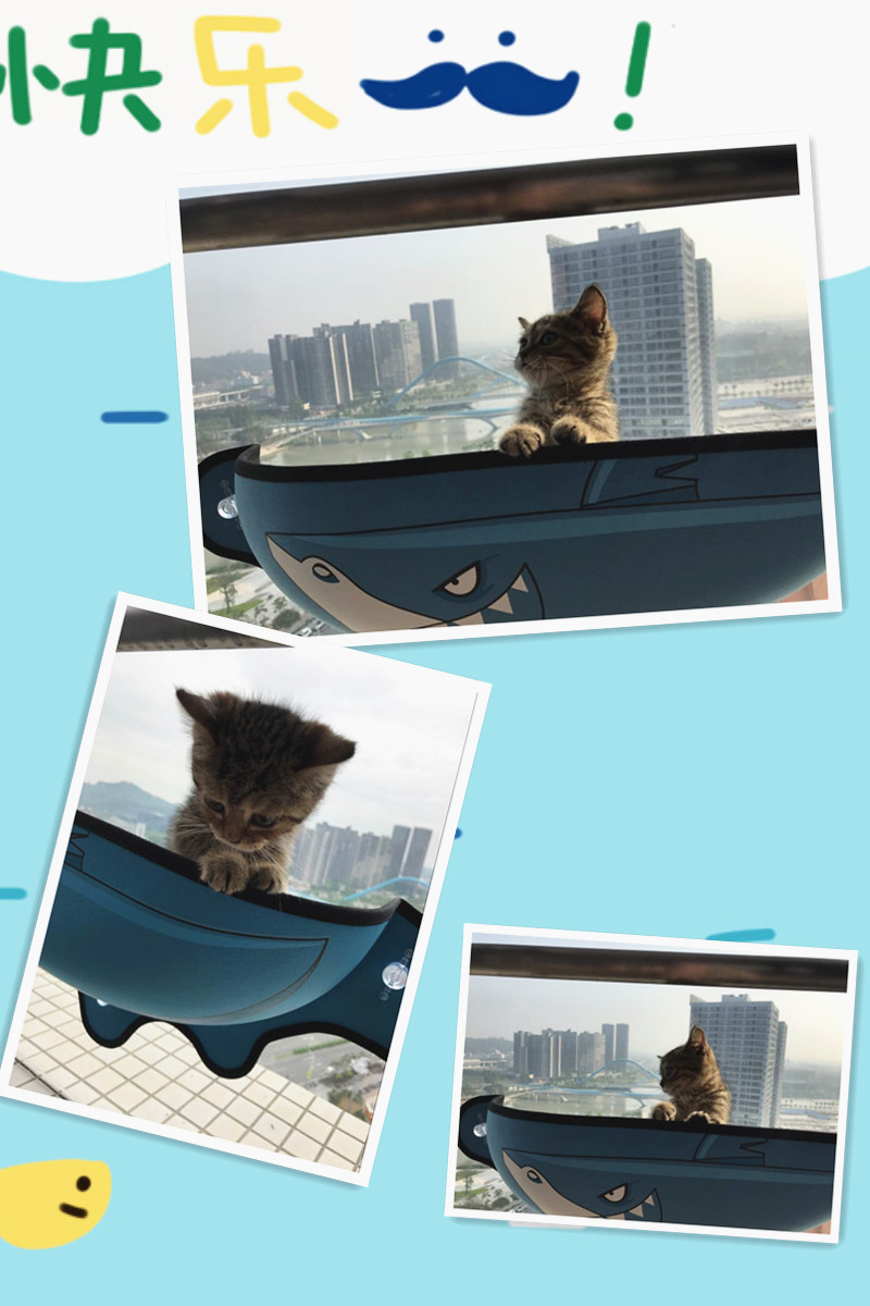 Cat Window Bed Cat Lounger Bed Hammock Sofa Mat Lounger Perch Cushion Hanging Shelf Seat with Suction Cup for Ferret Chinchilla 12