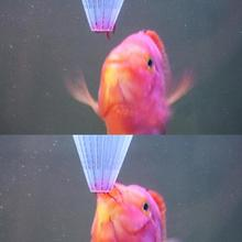 Fish Feeding Tools 4pcs White Aquarium Cone Feeder Red Worms Live Frozen Brine Fish Feeding Funnel