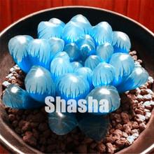 Big sale 200 pcs/bag Rare Succulent Mini Lotus Lithops Pseudotruncatella Pot Flower Fleshy Meaty Bonsai Garden Plant Easy Grow