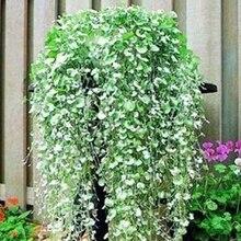 Sementes Semillas Four Seasons Газонная Трава Семян Подкова Золотые Подвесные Горшки Медный