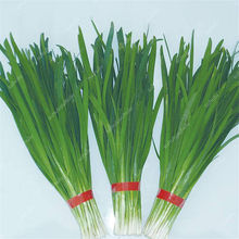 Chinese Chive Bonsai Garden Potted Leek Plants Bonsai For Home Garden Easy To Grow Vegetables Four Seasons Planting 300 Pcs/bag(China)