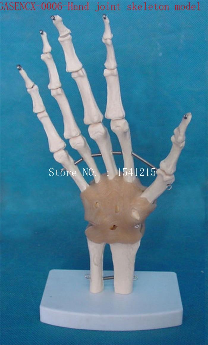 Hand joint skeleton model Human skeleton Skeleton model Teaching model Medical mold-GASENCX-0006 animal skeleton anatomy model veterinary medical teaching aids pet dog anatomical large dog skull model gasencx 0074
