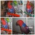 2017 лето попугай птица поводка проводки бесплатная доставка нейлон прочный для больших попугаев и птиц