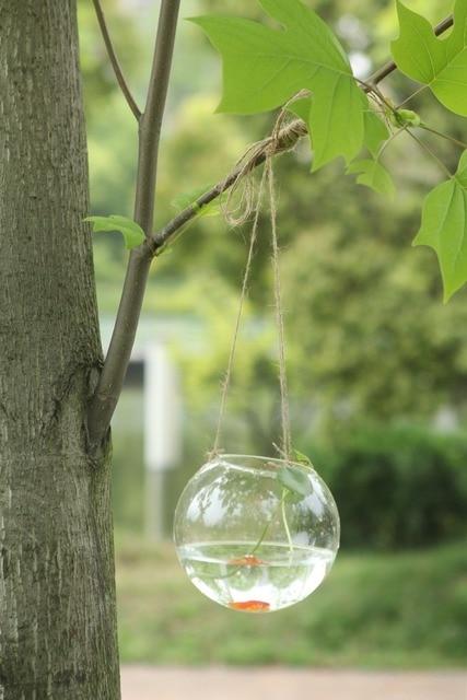 6pcs X Dia10cm Hanging Glass Ball Vase Succulent Glass Terrairum