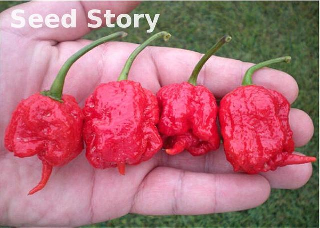 "100 bonsai 100% Genuine Fresh Rare Red ""carolina Reaper"" Pepper plants Hot Sale Chilli Organic Vegetable plants * Free Shipping"
